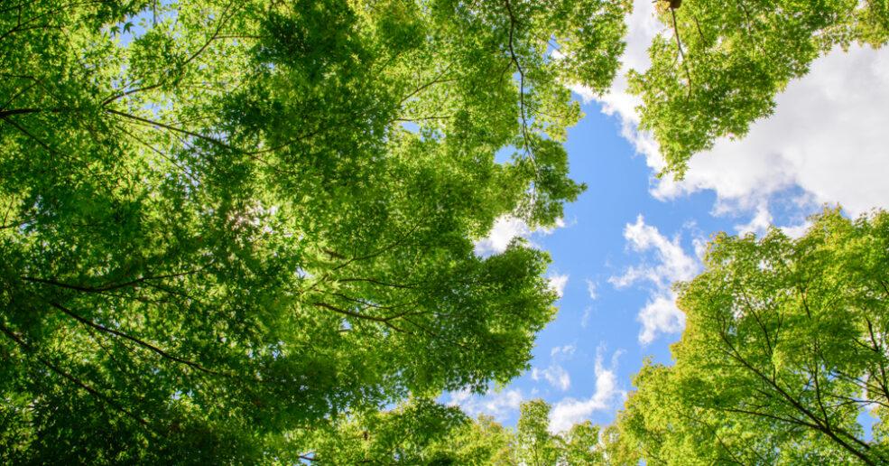 South Australians to benefit from boost to Greener Neighbourhoods program
